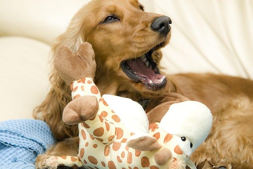 Que debes hacer en caso de que tu perro este aburrido