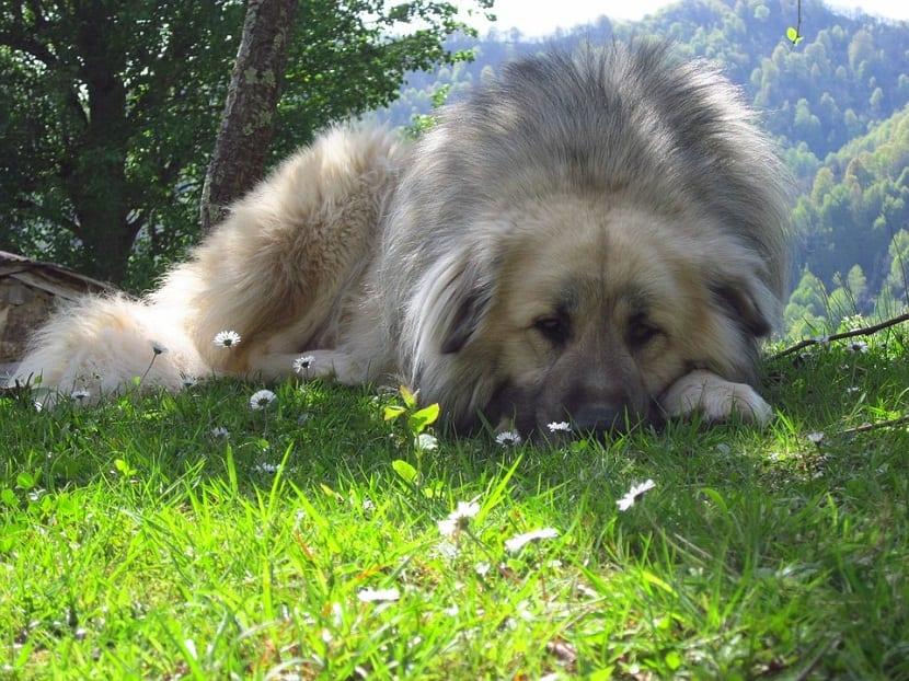 etapas convulsion en perros