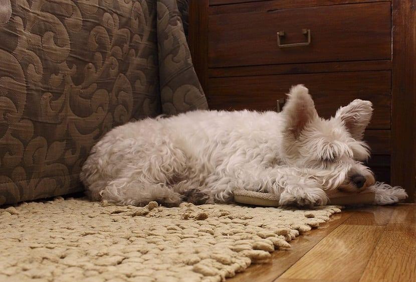 causas convulsion en perros