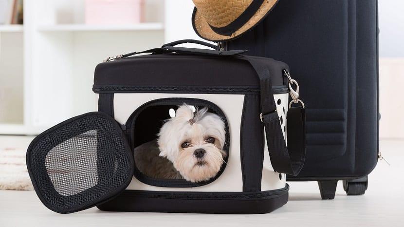 Viajar en tren con tu perro