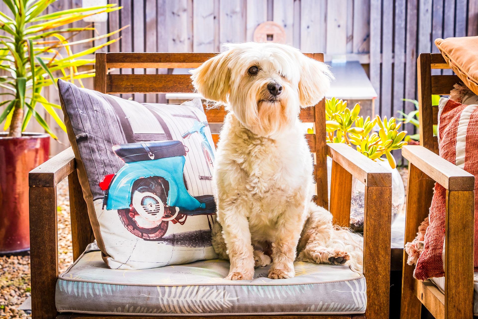 Si tu perro sufre convulsiones debes de llevarlo al veterinario