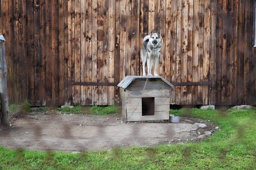 socialización especializada de un perro maltratado
