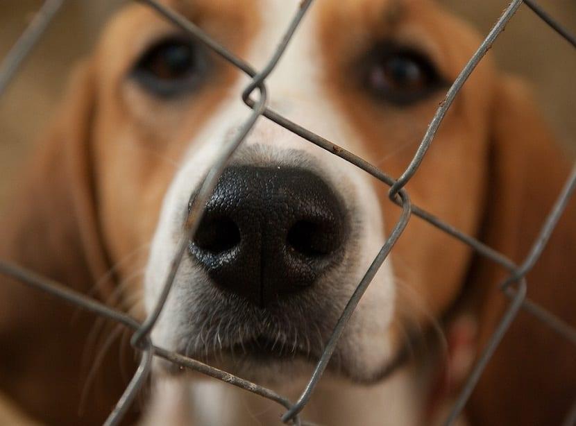 ayudar perros maltratados