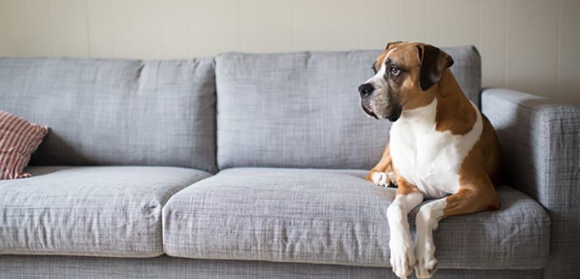 Territorialidad perro
