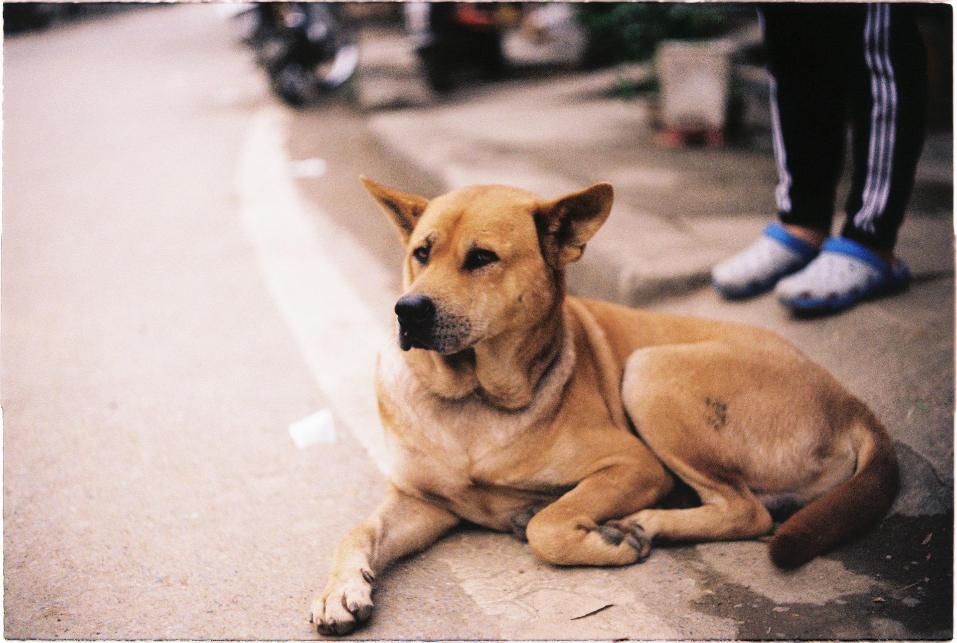 Cuida a tu perro durante las convulsiones