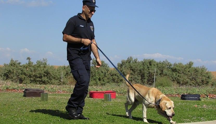 como entrenar a un perro