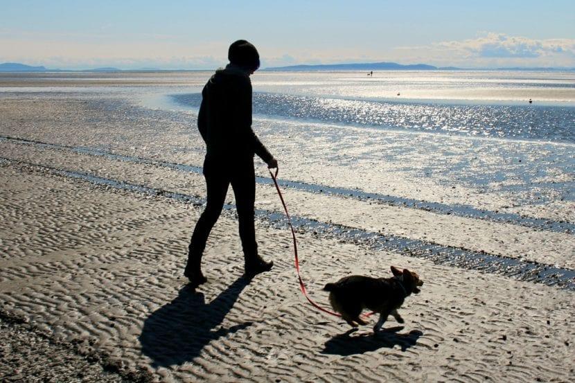Persona paseando a su perro por la playa