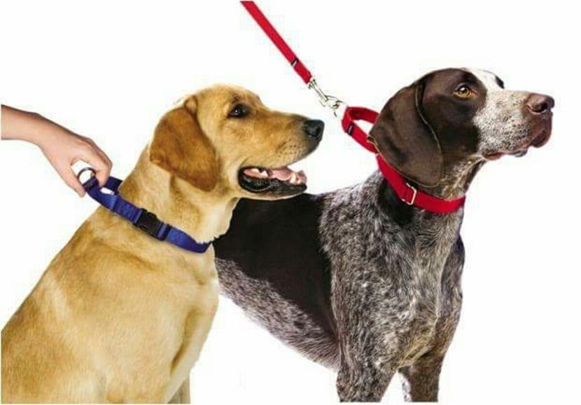 si el perro tira demasiado fuerte de la correa el collar apretará su cuello con la misma fuerza.