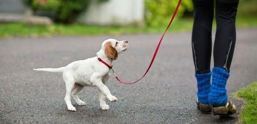 Mujer paseando a un cachorro.