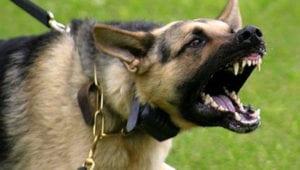 comportamiento agresivo en el perro