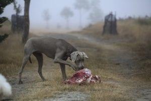 propiedades de la carne cruda para perros