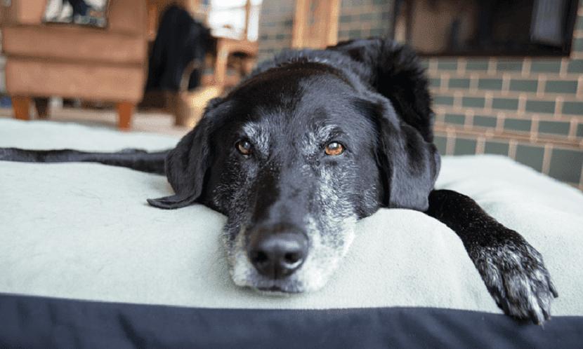 Insuficiencia renal cronica en el perro