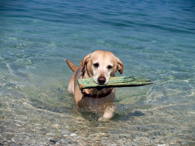 Las mejores playas para perros en Murcia