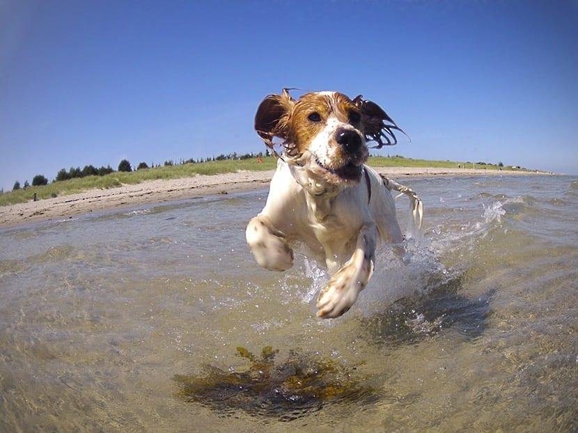 Las mejores playas para perros en Andalucia