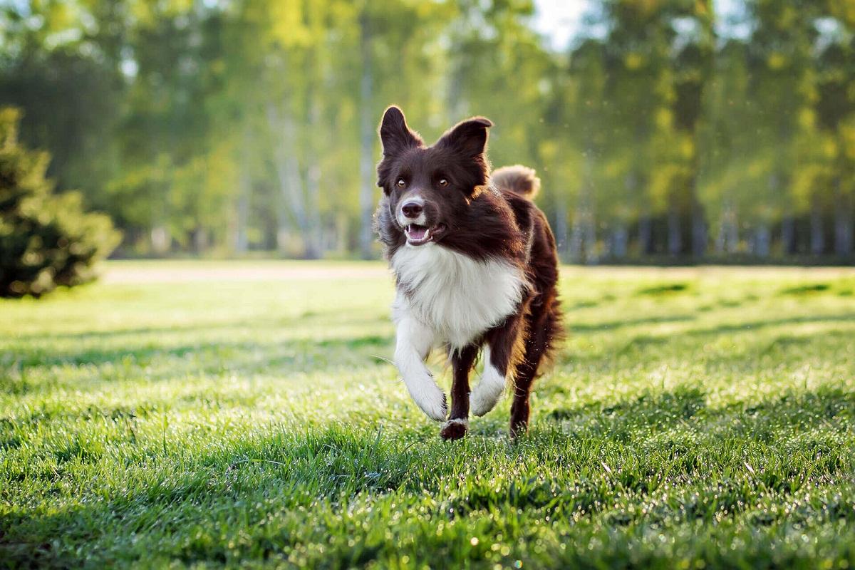 Ten cuidado si tu perro está en celo y la llevas a pasear sin correa