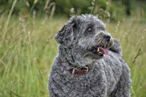 Las pipetas protegen a los perros