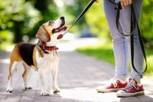 Diferentes tipos de collares para perros