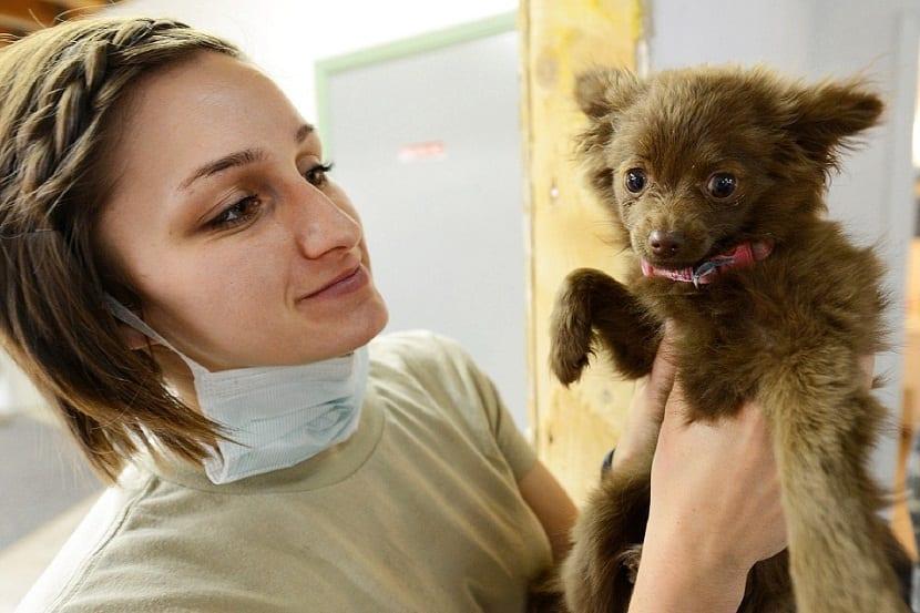 o más recomendable es que llevemos a nuestra mascota a una consulta con el veterinario