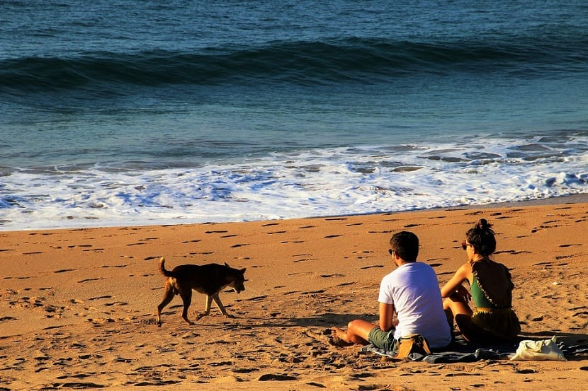Las mejores playas para perros en Cataluña