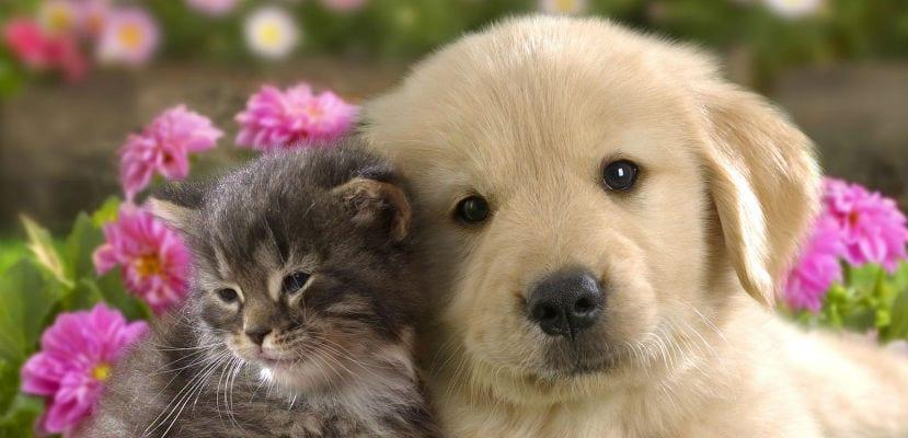 Perro y gato: cómo elegir.
