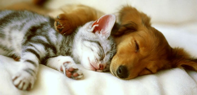 Ventajas y desventajas de tener perro y gato.