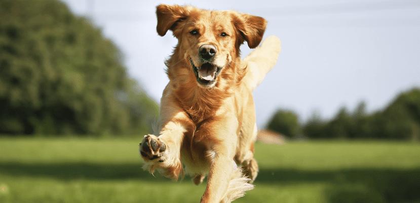 Los cuidados son necesarios para aumentar la calidad de vida de nuestro perro.