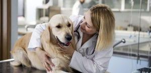 Castración en perros