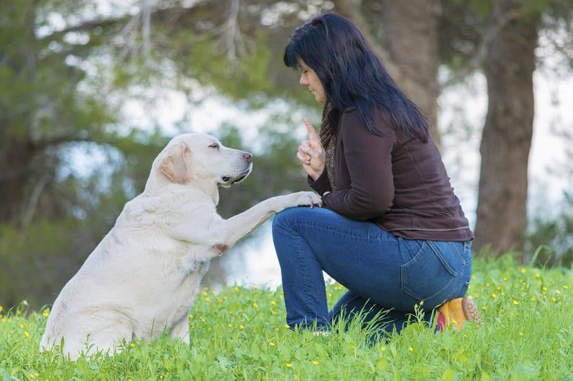 metodos para poder educar correctamente a un perro