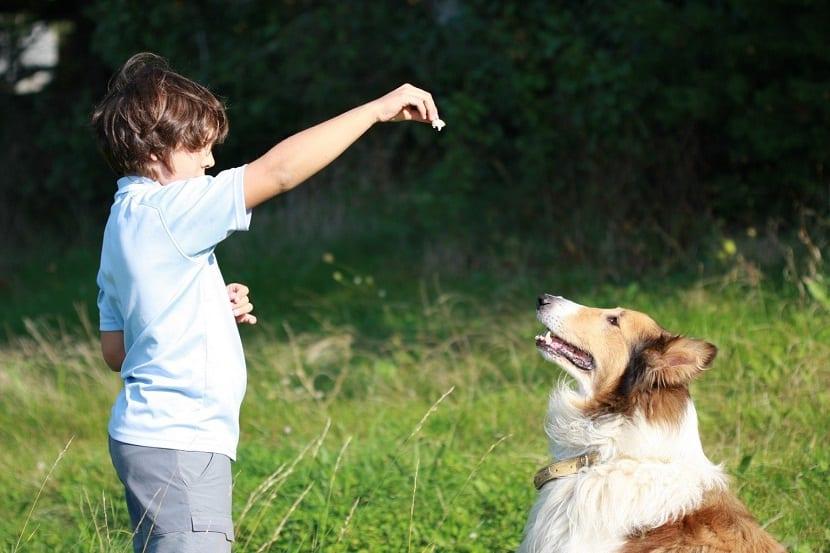 como educar un perro