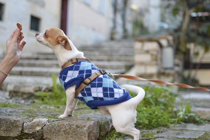 perros y alergias alimenarias