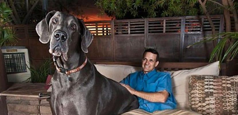 El perro más grande