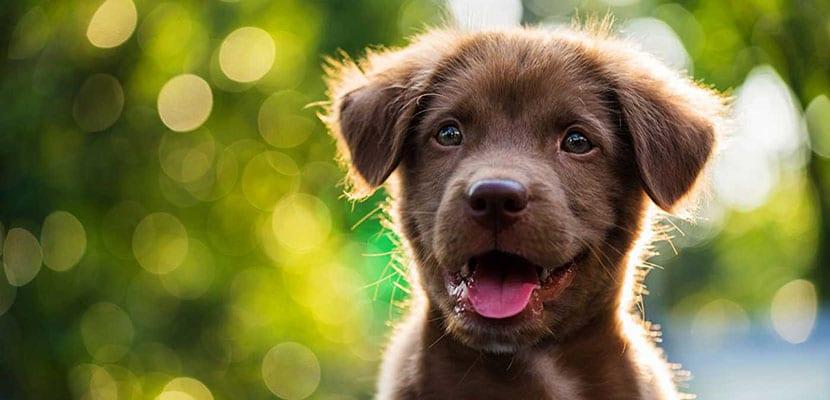 Cachorro en el campo