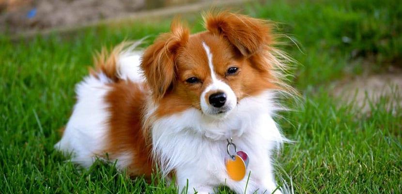 Seguro para perros en el hogar