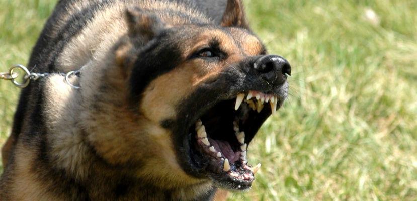 Los malos hábitos en el perro pueden tener su origen en diversas causas.