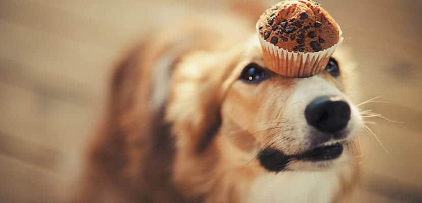 Perro con magdalena