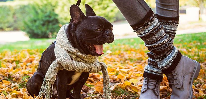 Perro paseando con bufanda