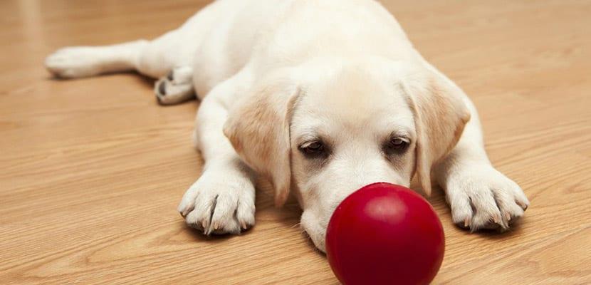 educacion y juego de los cachorros