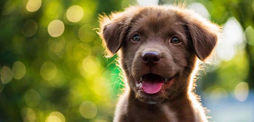 Cachorro contento