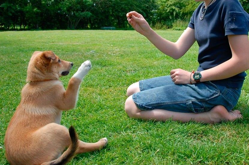 formas de entrenar a un perro