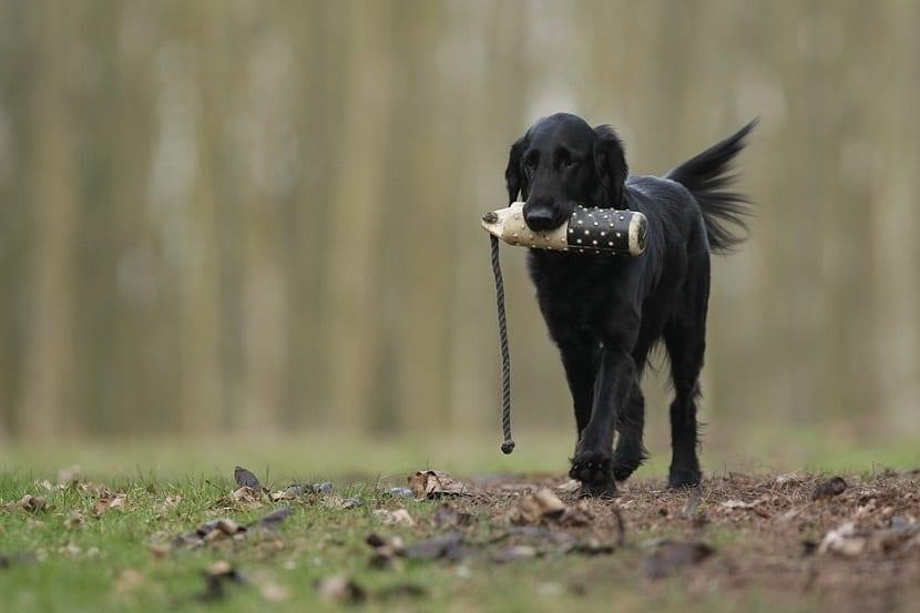 entrenar cachorro