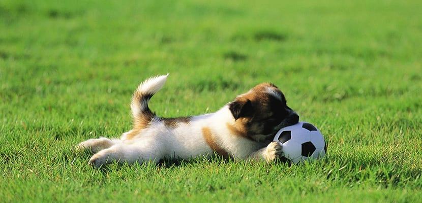 Cachorro jugando en el campo