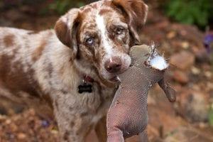 ¿Piensas que los perros tienen culpa?