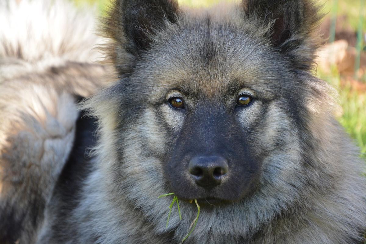 Los perros pueden dejar de ladrar