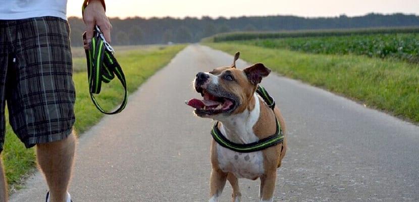 Perro de paseo y buen comportamiento