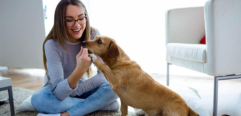 como comunicarse con los perros