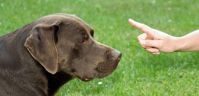 perro disciplina y equilibrio