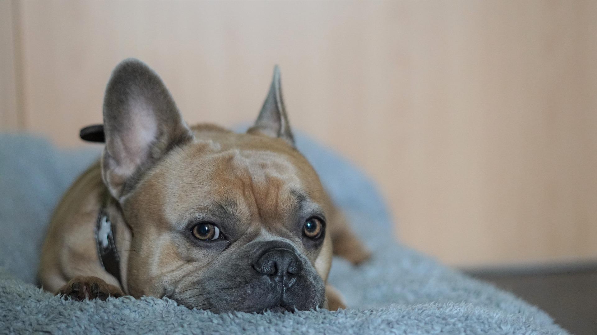 Consulta con el veterinario si tu perro está enfermo