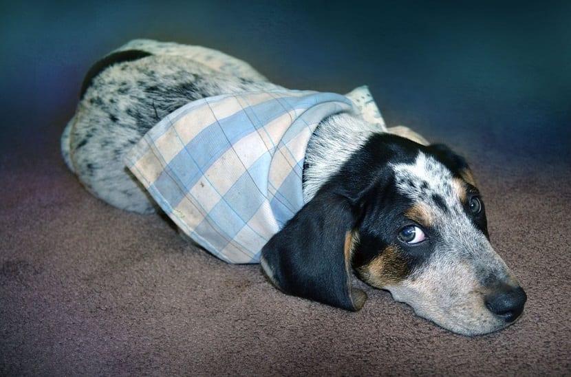 Las señales de calma de un perro