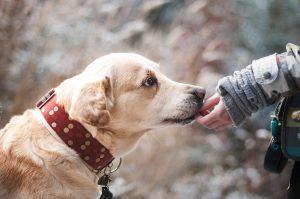 El abandono les afecta mucho a los perros