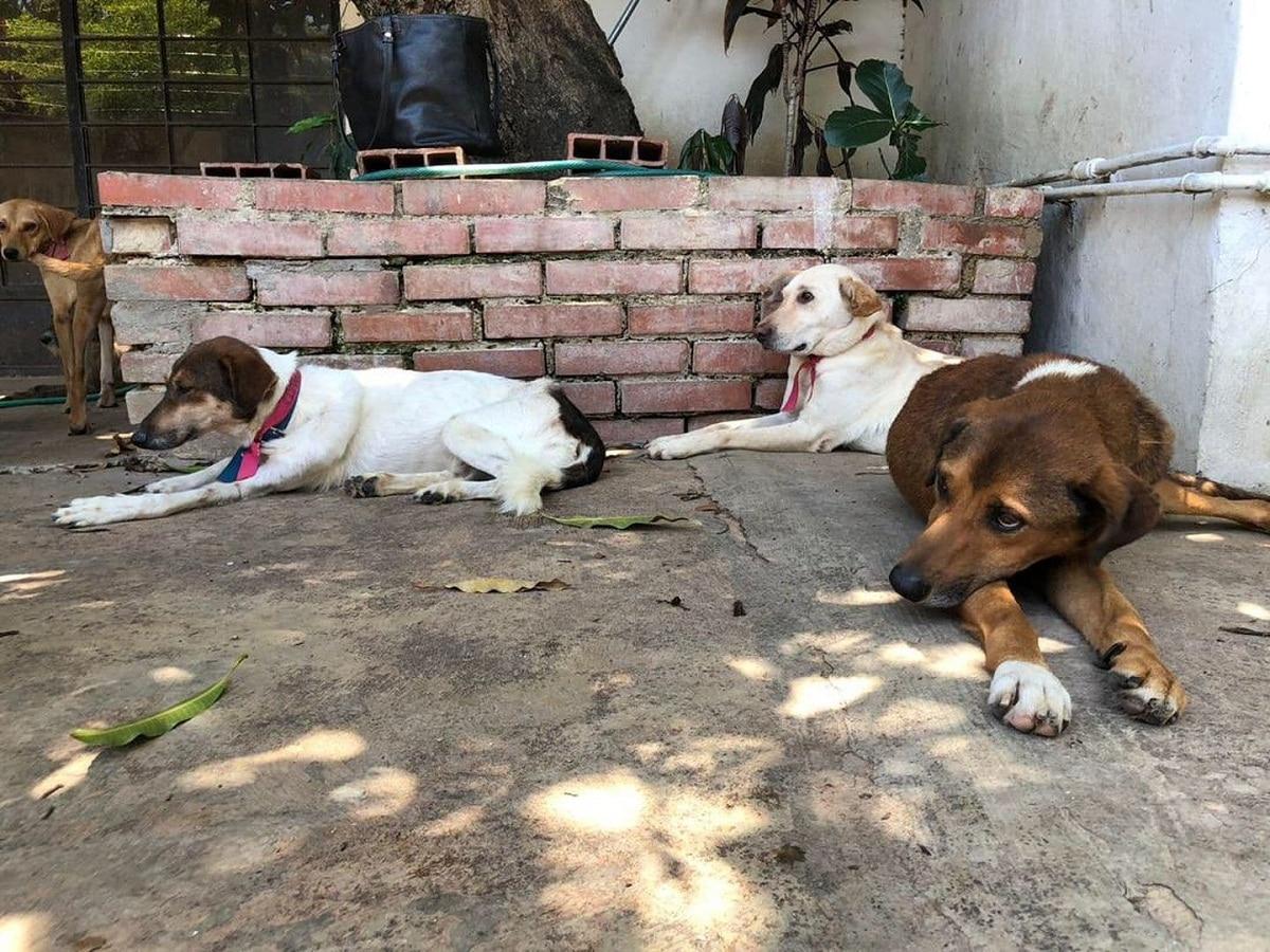 Los perros que acaban en la calle tienen problemas